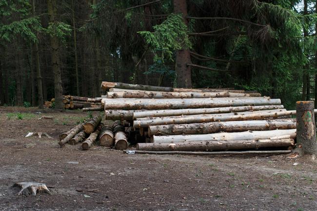 бумага, сделана, из чего, как, дерево, вырубка, лес